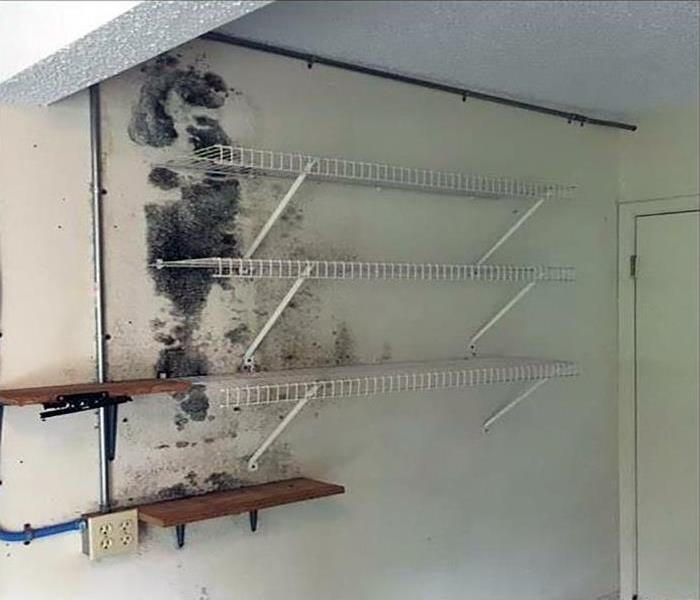 Mold Damage In El Segundo Before
