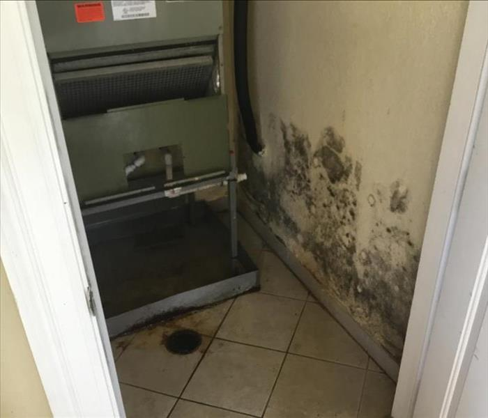 Los Angeles Mold Damage
