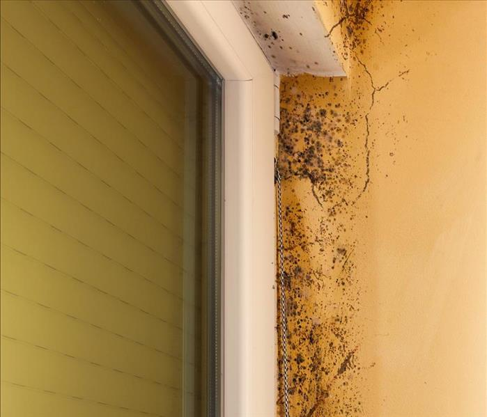 Mold Remediation Mold Damage in Los Angeles Requires Complicated Remediation