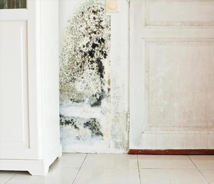 Mold Remediation Better Understanding Mold Growth in Your Marina Del Rey Residence