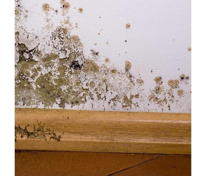 Mold Remediation Remediating Mold Damage in Marina Del Rey