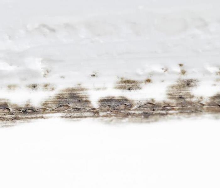 Mold Remediation Some Bathroom Habits can Increase the Chances of Mold Damage in Your Marina del Rey Home