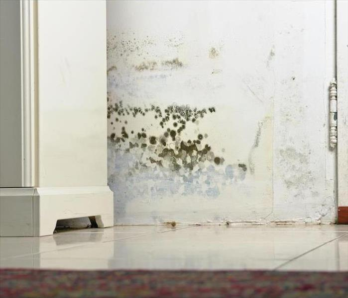 Mold Remediation Recovery Solutions for Mold Damage in Your Marina del Rey home